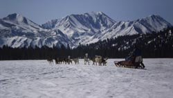 Dog Sledding Day Tours With Mammoth Dog Teams