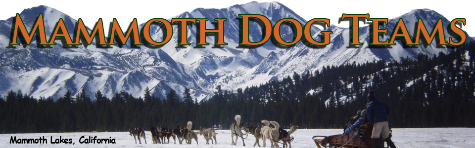Mammoth Dog Teams