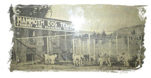 Mammoth Dog Teams History