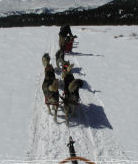 Mammoth Dog Teams - Overnight Dog Sled Tours